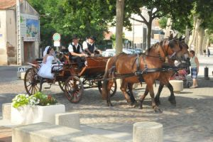 mariage-caleche-pyrenees-orientales-1